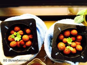 Passion Made Possible Strawberries
