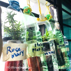 Container Herbs Garden