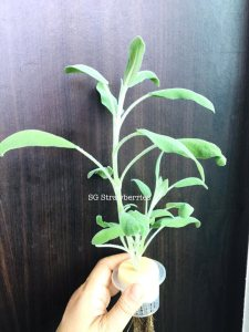 Grow Harvest Fresh herbs indoor