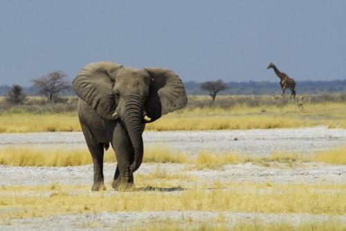 Namibia: Etosha NP. Fauna