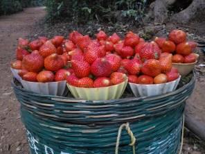 Luscious Berries...