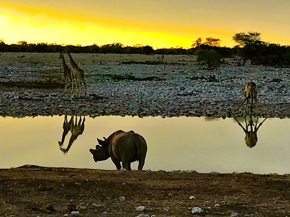 Etosha National Park - Guide to Planning Your Visit