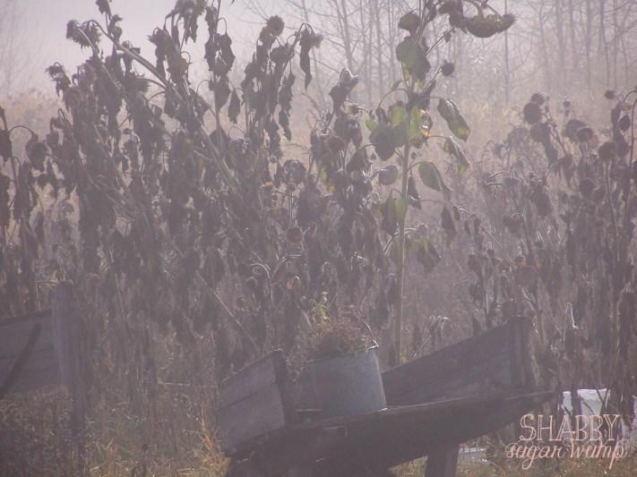 foggy day-3