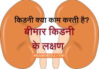Kidney ke function in hindi