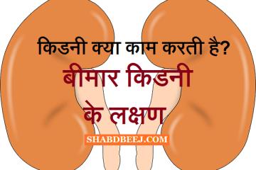 Kidney karya Kidney bimari karan