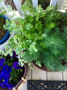 herbs by the front door