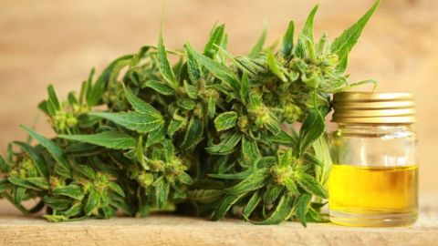 Difference_Hemp_Marijuana_CBD_Oils_WIDE