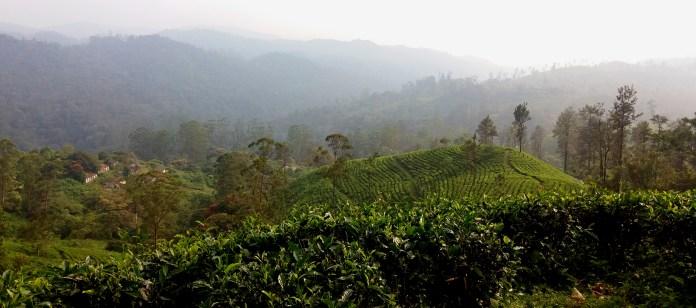 Tea Plantations, Valparai