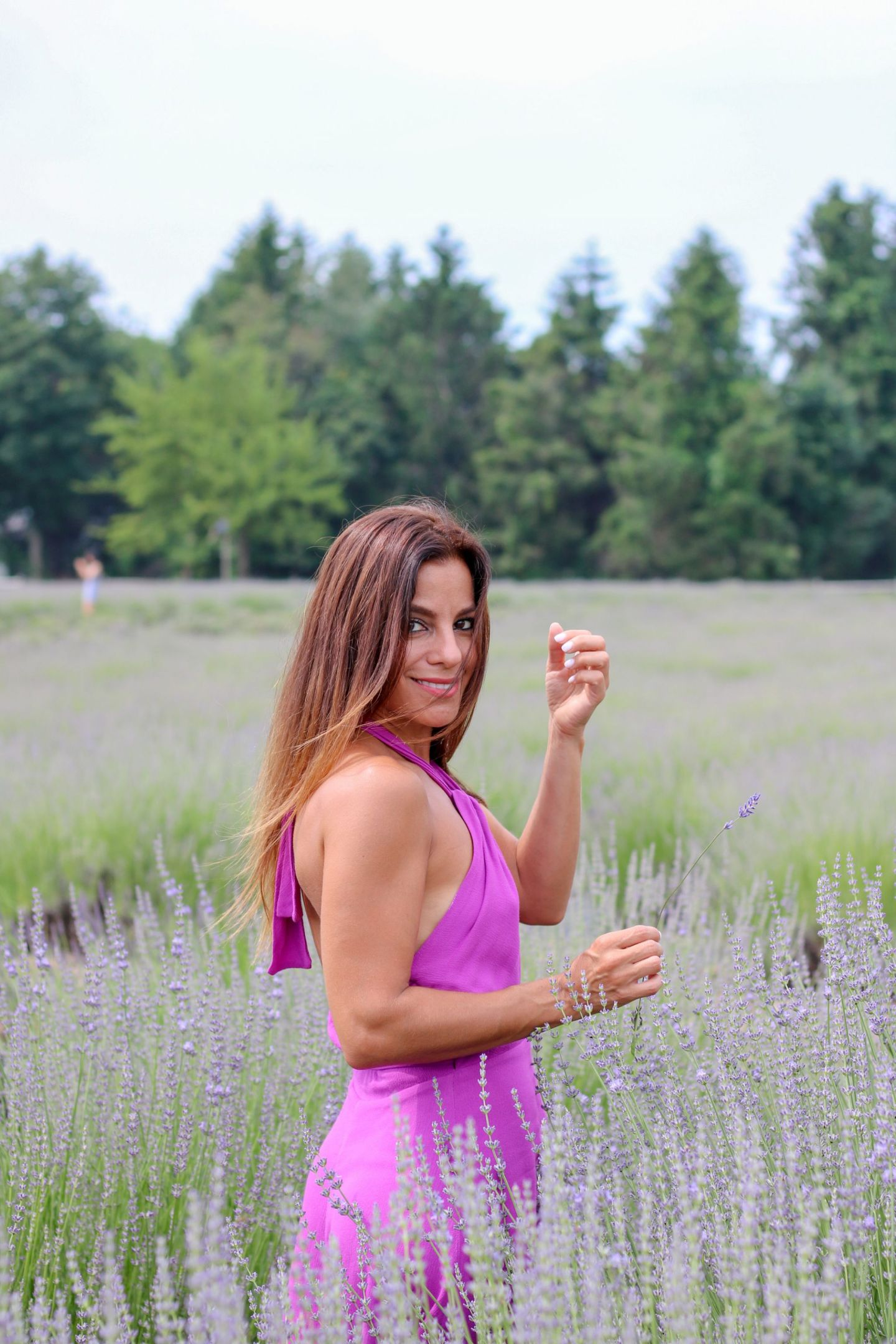 lavender field Long Island