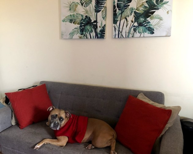 Small Apartment Living Room | Shades of Sarah