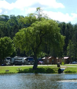 A willow tree on the banks of one of the lakes with campers in the background