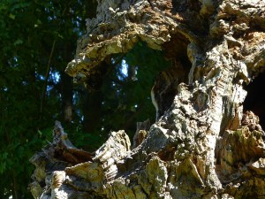 A gnarled old tree stump with a gaping maw