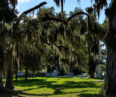 Spanish moss in the live oaks