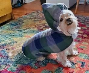 Alfie's Sounders colors coat