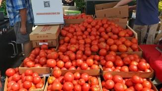 Tomato Galore!