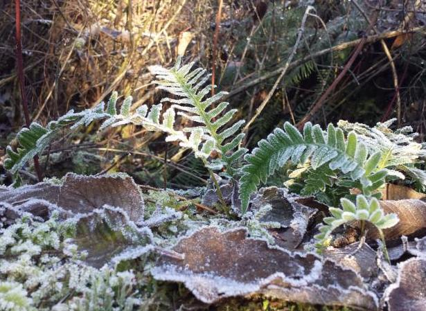 Up Close and Personal:  A Micro-Tour of Shadow Lake Bog