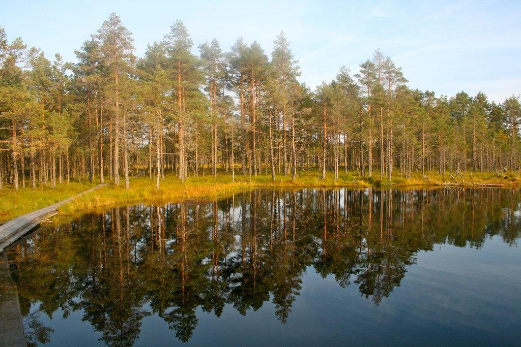 Bog Restoration Abroad