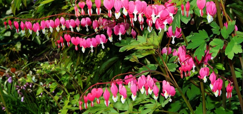 Native Plant of the Month: May Flowers
