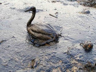 Oil Pollutions