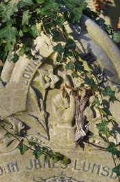 The first time I saw the Lumsden pointing finger symbol a branch of ivy obscured the rose on the other side of the daffodil. ©Carole Tyrrell