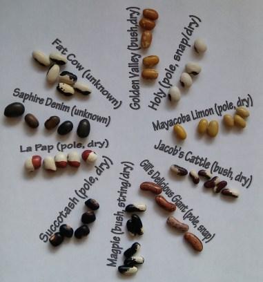 10 bean varieties