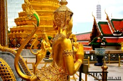 The Grand Palace in Bangkok, one of the most visually stunning places I have ever been to!