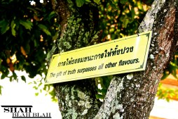 A Thai saying posted to a tree that I spotted while roaming around Old Phuket Town, Thailand.