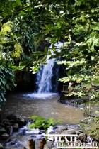 Annandale Falls: mini-taste of paradise.