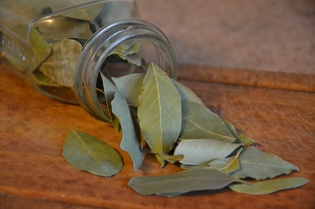 indian bay leaf tejpatta