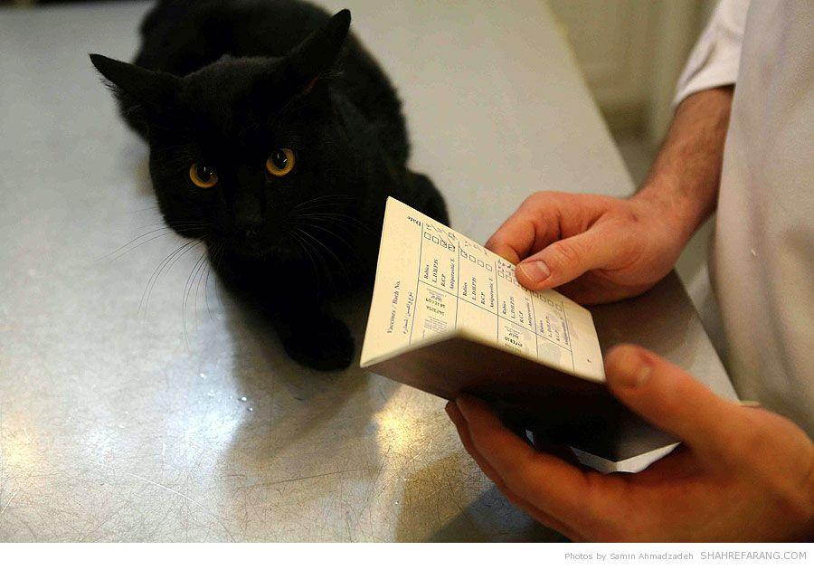 https://i2.wp.com/shahrefarang.s3.amazonaws.com/wp-content/uploads/2014/03/Animal-Hospital-Tehran-9397.jpg