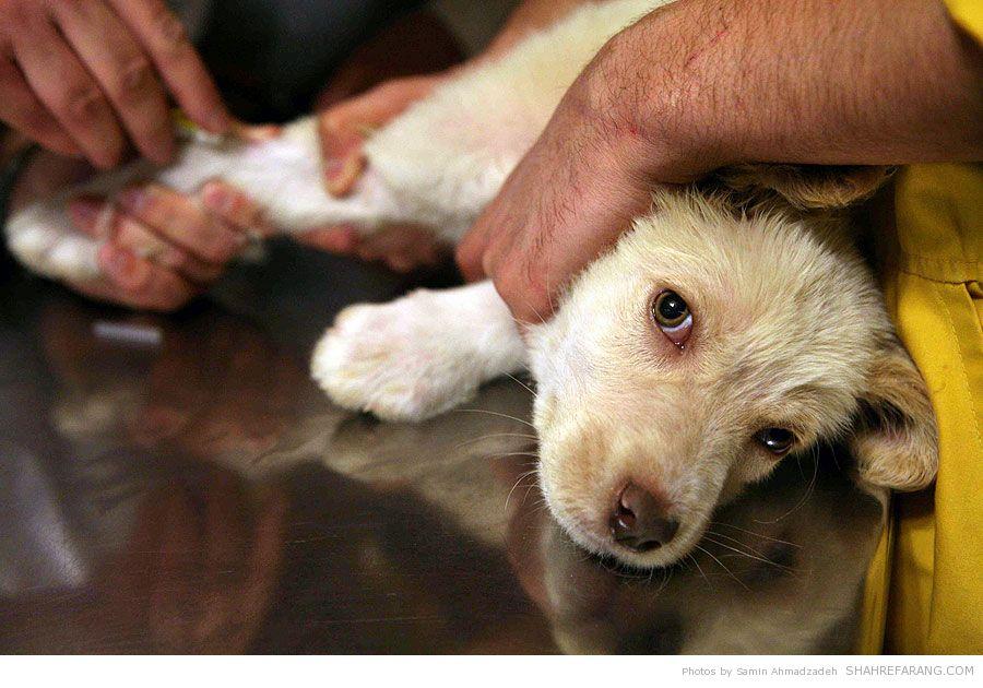 https://i2.wp.com/shahrefarang.s3.amazonaws.com/wp-content/uploads/2014/03/Animal-Hospital-Tehran-9757.jpg