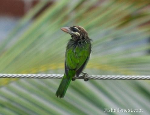 bird-377