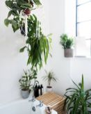 Life Plant Decorations for Indoor in Vertical Hanging Pots Part 46