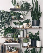 Life Plant Decorations for Indoor in Vertical Hanging Pots Part 49