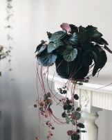 Life Plant Decorations for Indoor in Vertical Hanging Pots Part 52