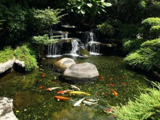 Amazing waterfall ideas giving the best look and panoramic schemes for your landscaping style Image 16