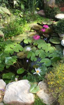 Best water garden style rich of natural accents with stones and aquatic plants compositions Image 11