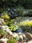 Best water garden style rich of natural accents with stones and aquatic plants compositions Image 15