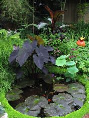 Clever exterior update showing different fresh fish pond designs Image 12