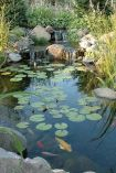 Water garden ideas for more natural backyard feeling with beautiful aquatic plants and ponds Image 22