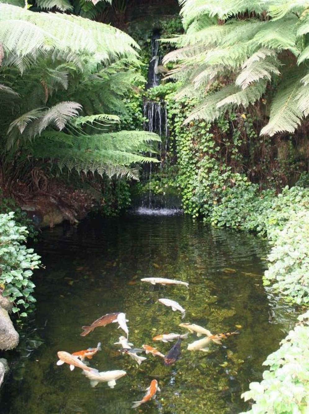 Water garden ideas for more natural backyard feeling with beautiful aquatic plants and ponds Image 24