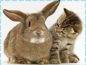 kitten-rabbit_cat