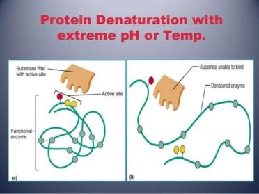 rantai protein bila panas