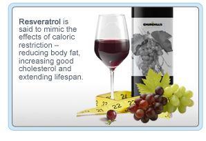 resveratrol kurus