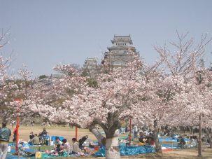 castle_himeji_sakura02