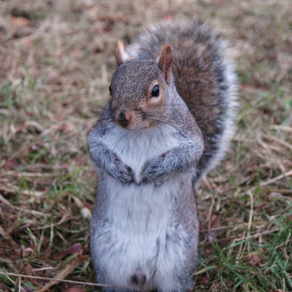 The Tale of Four Squirrels – revisit