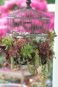 birdcage succulent