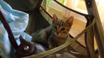 In the stroller
