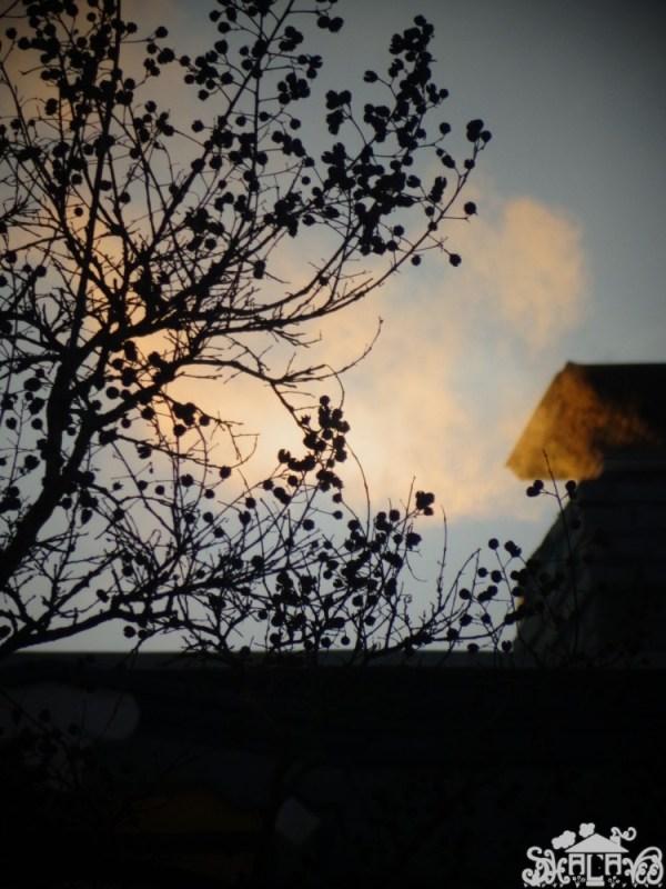Smoke from my neighbor's chimney on Shalavee.com