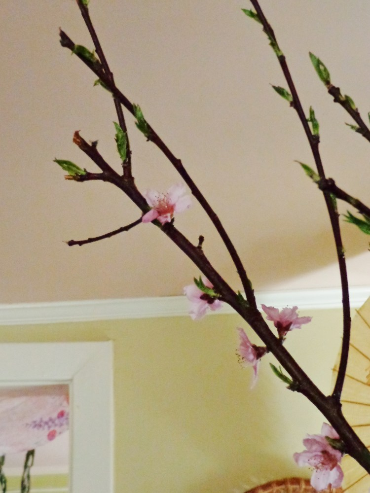 Cherry blossom branches from Shalavee.com